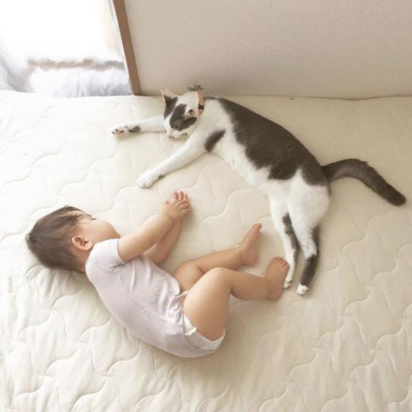 【いぬねこ うちのこ。】おにいちゃん(4歳)&おとうと(2歳)と3匹の猫たち/くるのさん