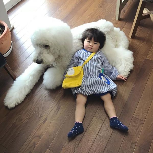 【いぬねこ うちのこ。】まめちゃん(2歳)と3匹のスタンダードプードルたち/たまねぎさん