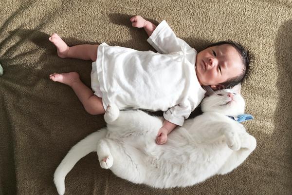 【いぬねこ うちのこ。】小春ちゃん(6歳)と素生くん(1歳)と猫の碧夫(推定4歳)/カラキカナエさん