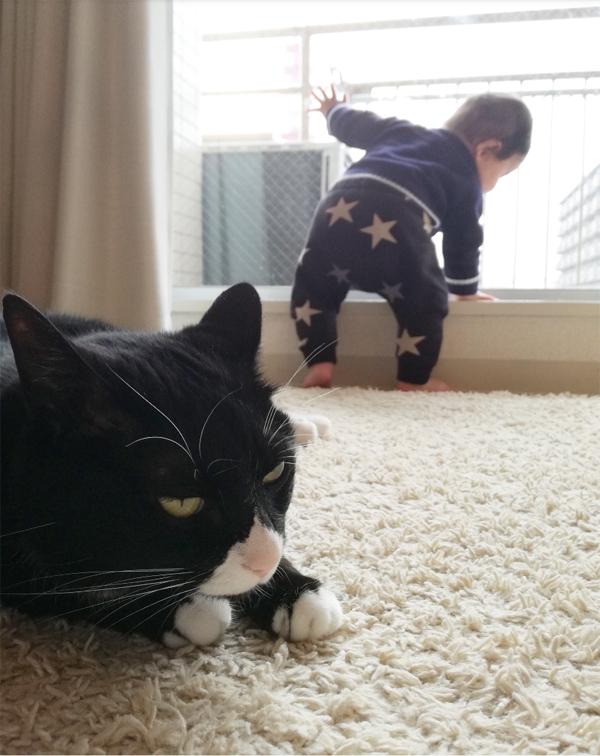 【いぬねこ うちのこ。】おくちがハートの猫サリーと小さな姉弟たち/かねこかなえさん