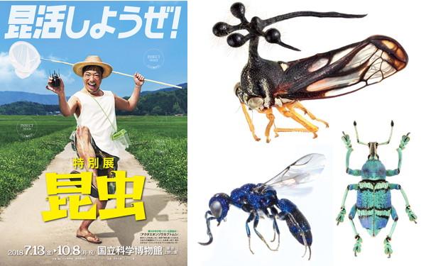 """自由研究は「科博初の大型昆虫展」で決まり! 日本初で""""知りたい欲""""を刺激する"""
