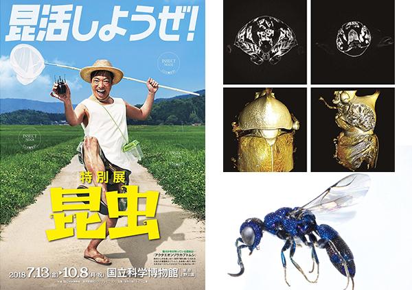 「特別展昆虫」カブトムシのマイクロCTスキャン画像(上)再構成された3D画像(下)