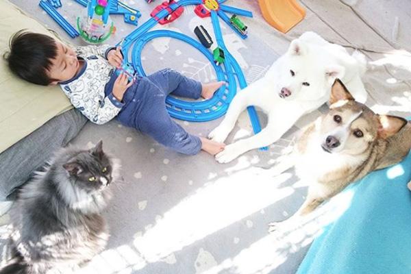 【いぬねこ うちのこ。】ぶんちゃん(2歳)と大きな犬たちと猫のわかば/こましろ母さん