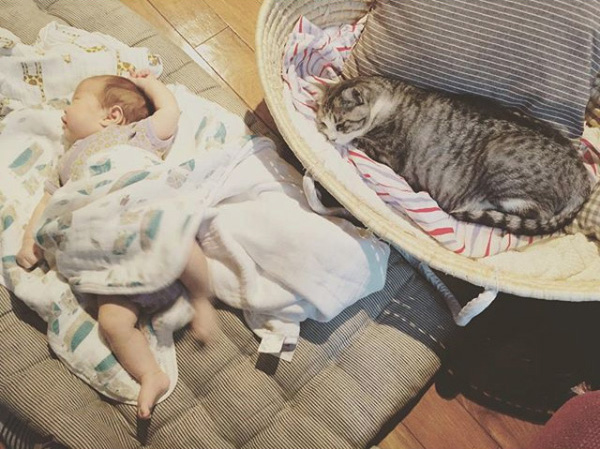 【いぬねこ うちのこ。】なまこちゃん(3歳)と猫のサバ美(推定10歳)/坂本美雨さん