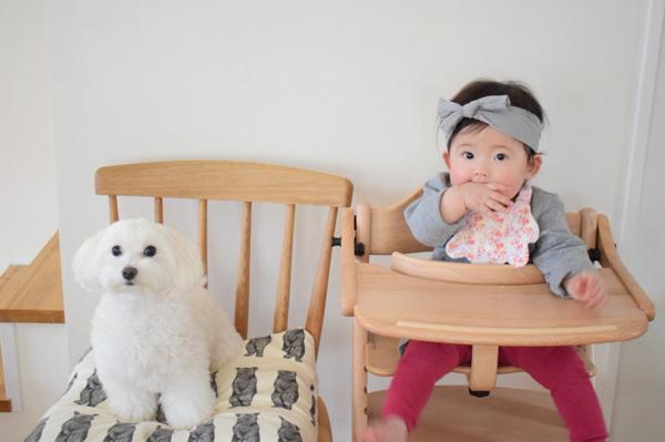 【いぬねこ うちのこ。】えなちゃん(1歳)とマルプーのフラン(2歳)/anさん