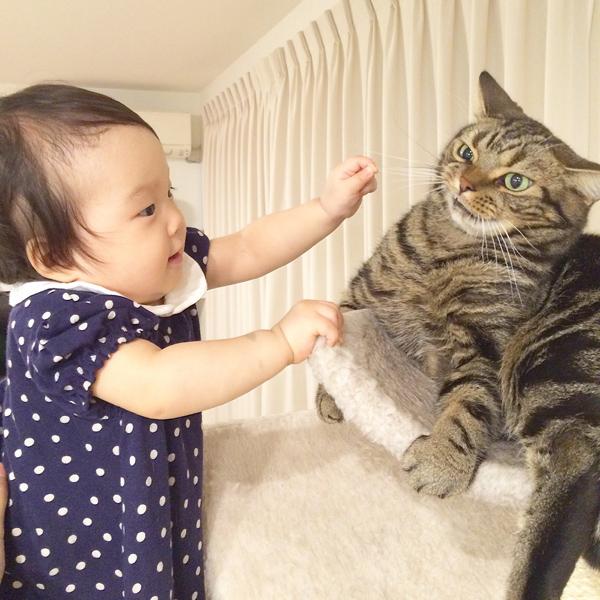 【いぬねこ うちのこ。】3歳の娘さんと猫のポポ(4歳)/りーさん