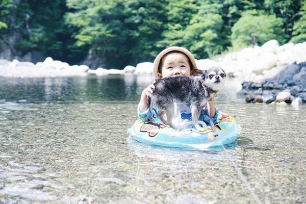 【いぬねこ うちのこ。】大福マン(3歳)とチワワの月ちゃん(11歳)/ともえさん