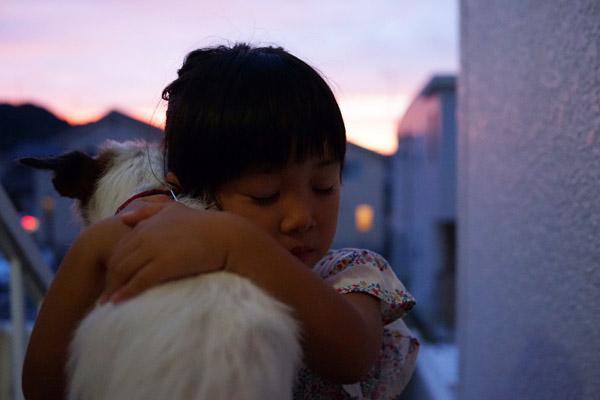 【いぬねこ うちのこ。】はるかちゃん(5歳)、ジャックラッセルテリアのさくら(8歳)/csさん