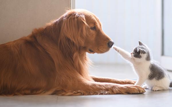 忠実な犬とツンデレ猫、どっちが好き? 反抗期の子どもとの関係も注目