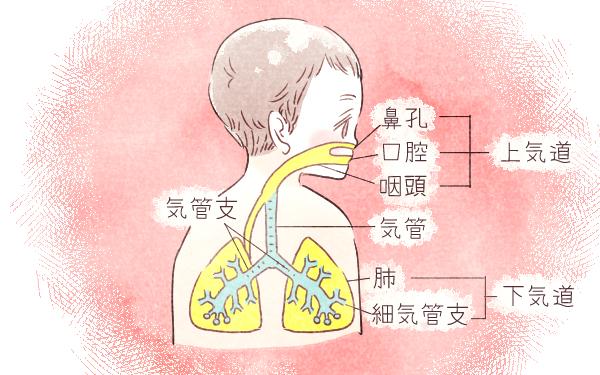 2歳までにほぼ100%が感染! 侮ってはいけない「RSウイルス感染症」【ママが知るべき「子どもの感染症」傾向と対策 第8回】