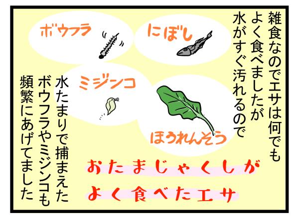 【新連載】大人も子どもも学びが多い自然とのふれあい! 今回はおたまじゃくしを飼ってみた【こどもと見つけた小さな発見日誌 Vol.1】