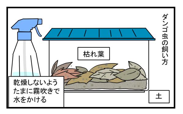 ダンゴ虫の飼育は他の生き物より簡単