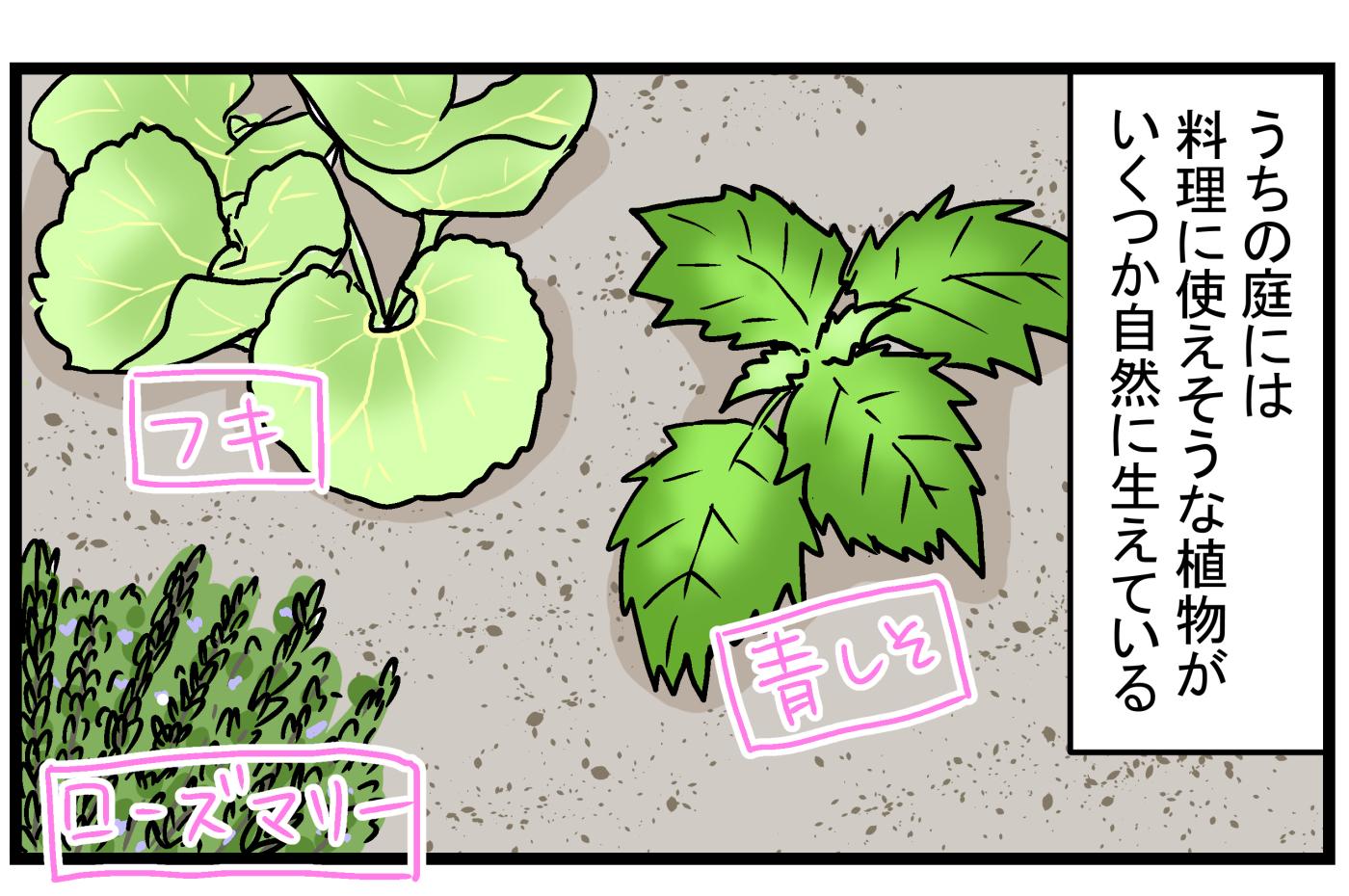育て方次第では、厄介な雑草になることも!? 庭に生えてきた「ミント」の話