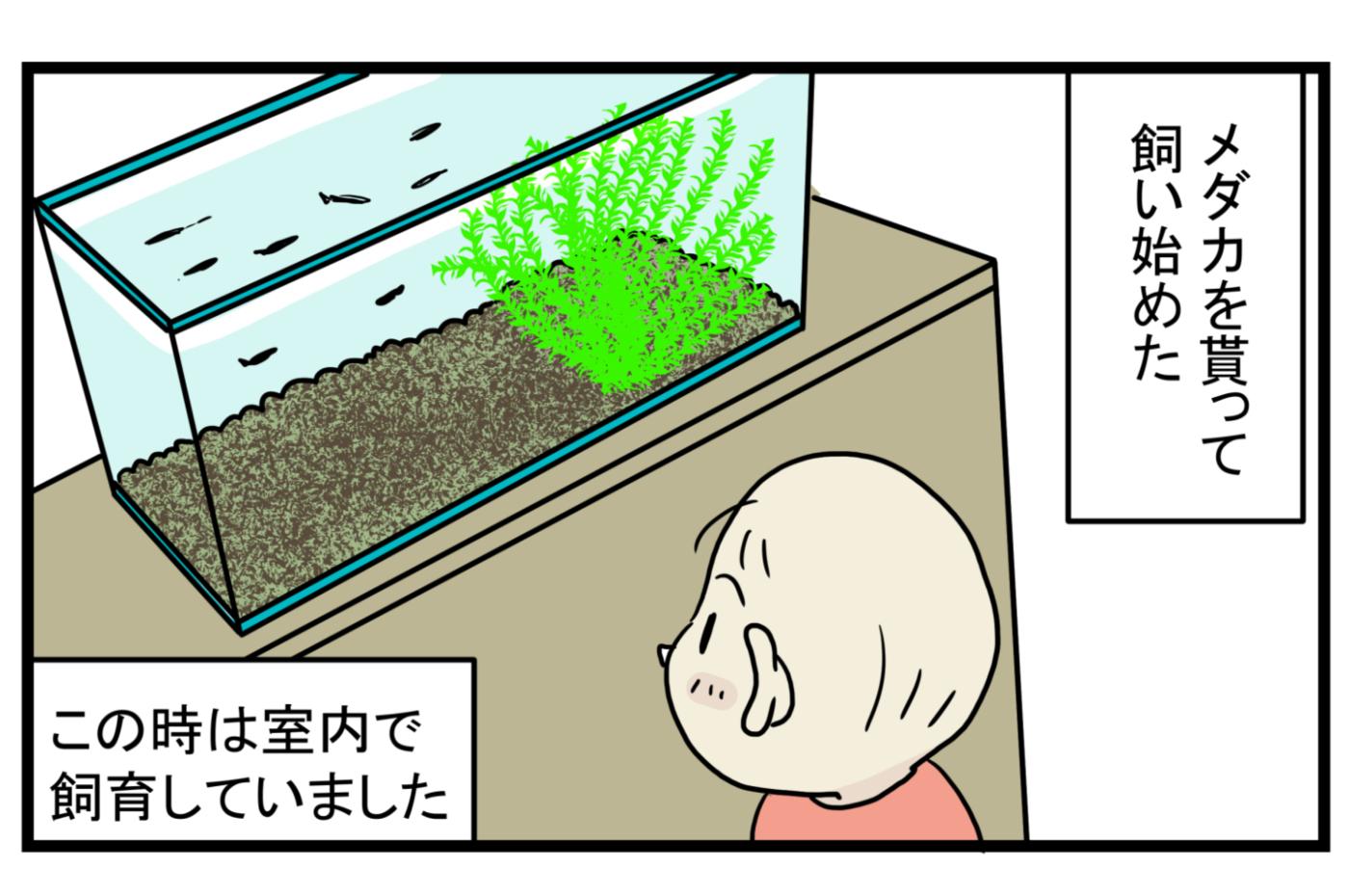 少し悲しい思い出…メダカが減っていく原因は「アノ生き物」にあった!