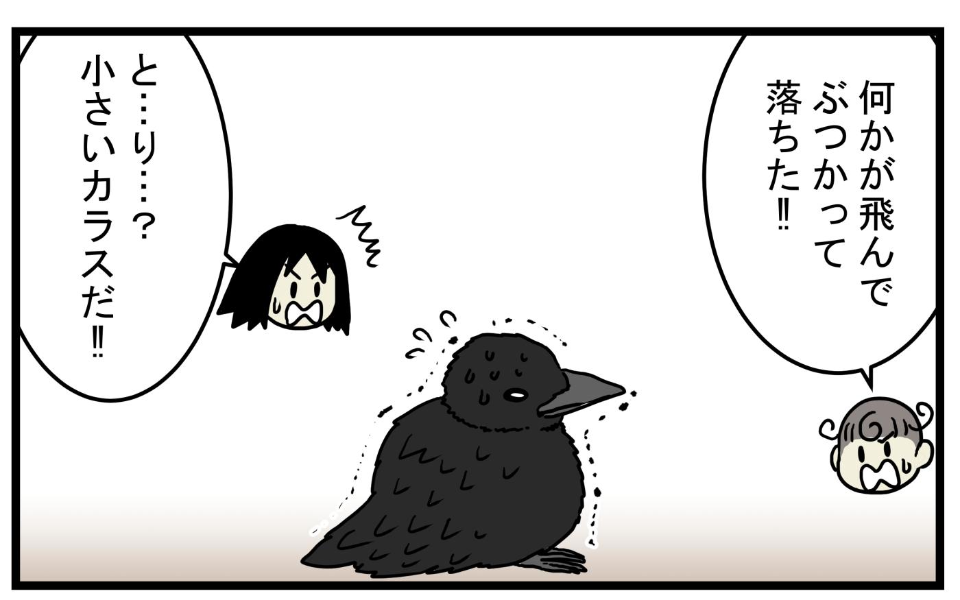 巣立ったばかりのヒナは上手に飛ぶことができない