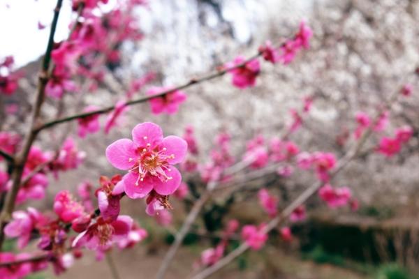 ほのぼの!レンタサイクルで春爛漫の茨城を散策「つくば霞ヶ浦りんりんロード」