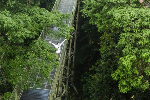 地上から見上げるのではわからない、樹上の動植物の様子が観察できるキャノピーウォーク。