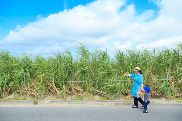 沖縄・八重瀬町へ子連れ旅。サトウキビ畑をおさんぽ。