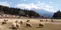 羊と触れ合いニット作品を味わう、「まかいの牧場ウール倶楽部」の展示会開催