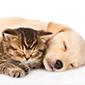 ペット・動物が好きな会員