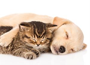 ペット・動物が好きな会員のイメージ